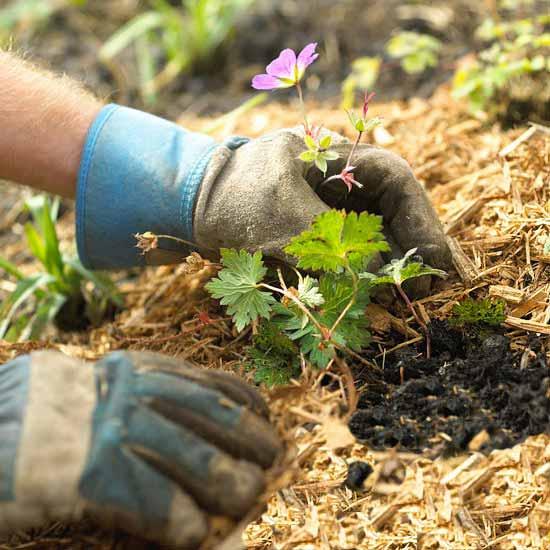 Garden Establishment - Landscaping Brisbane